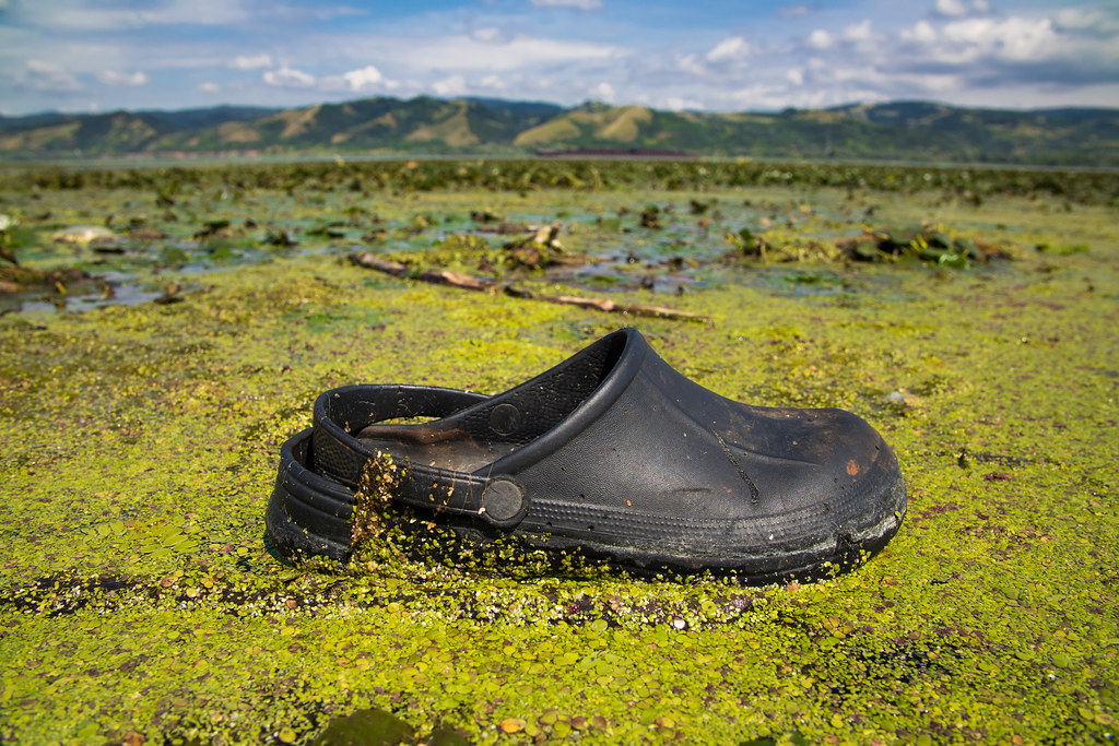 Rubber flip flop floating on the surface of the Danube river. Water pollution