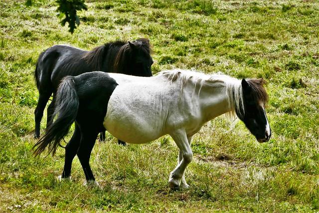 pony's trousers