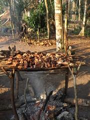 Pique-Nique en foret -Gabon-1750