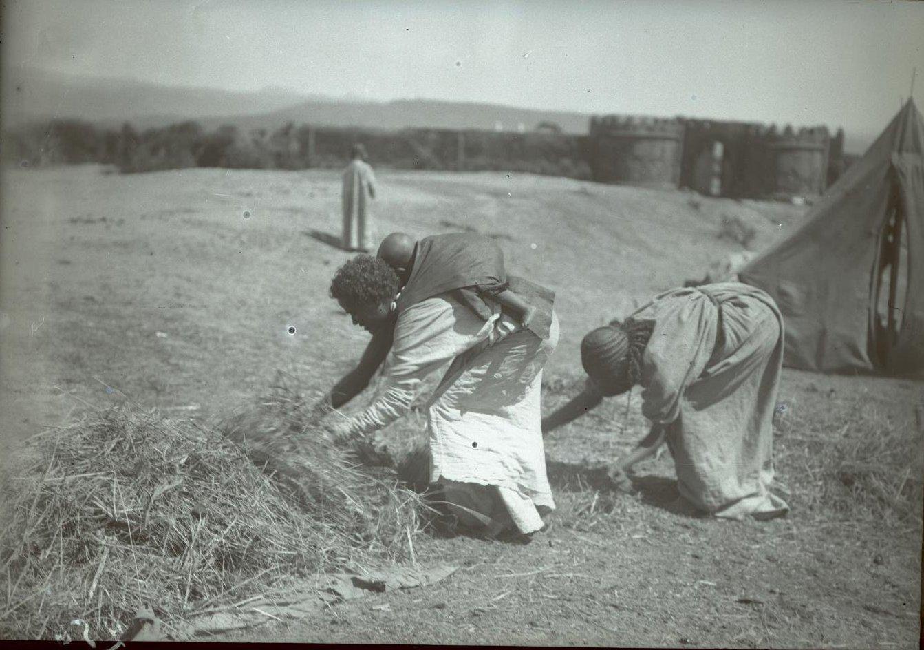 256. Абиссиния, провинция Харар, г. Харар. Галласки, собирающие хворост