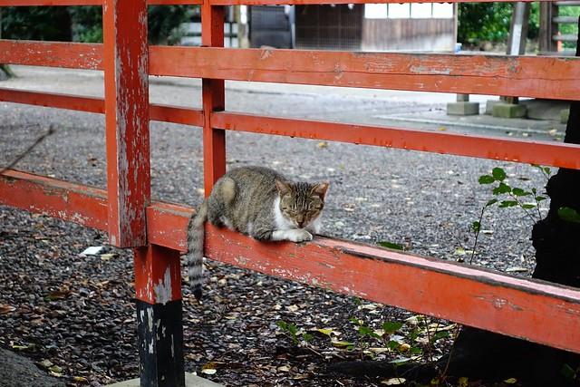 Today's Cat@2019-09-01