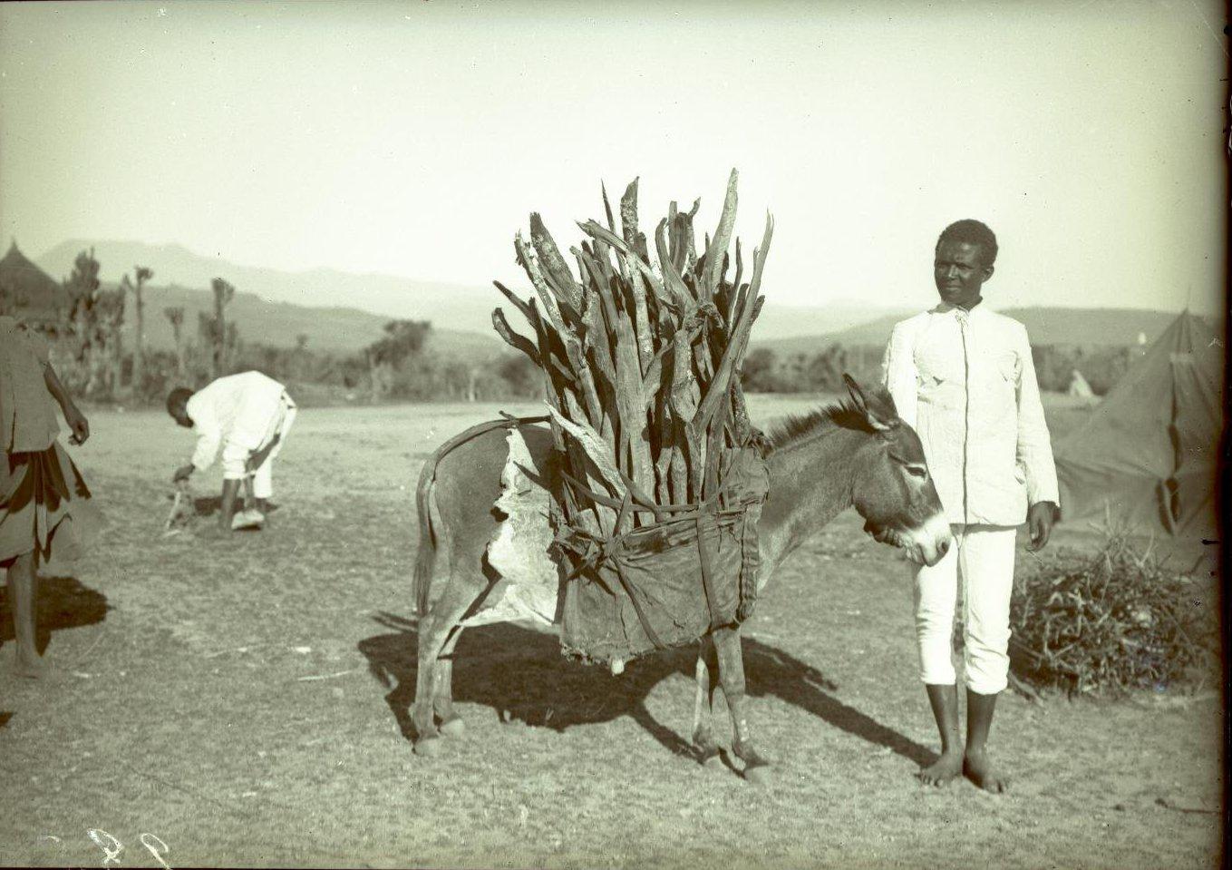 284. Абиссиния, провинция Харар, г. Харар. Гассен  и ослик с дровами