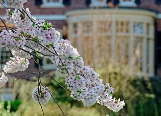 2019 Sherwood Gardens Spring