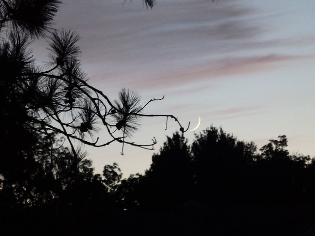 Crescent moon, 31 Aug 2019