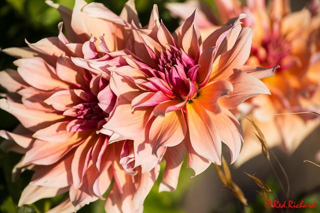 Flower Inverness Botanical Gardens