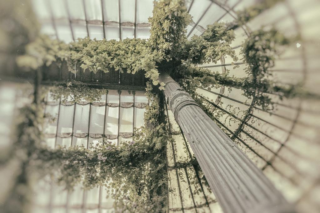 Greenhouse dreams - Sueños del invernadero