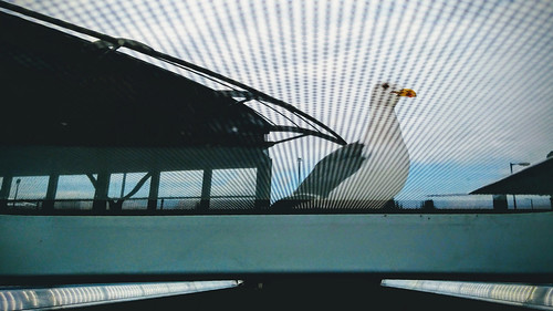 A gull on the bus