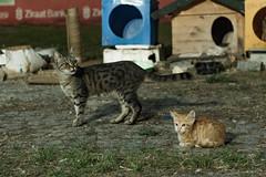 Cats, Karaköy, Istanbul