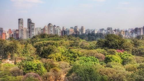 ibirapuerapark saopaulo brazil