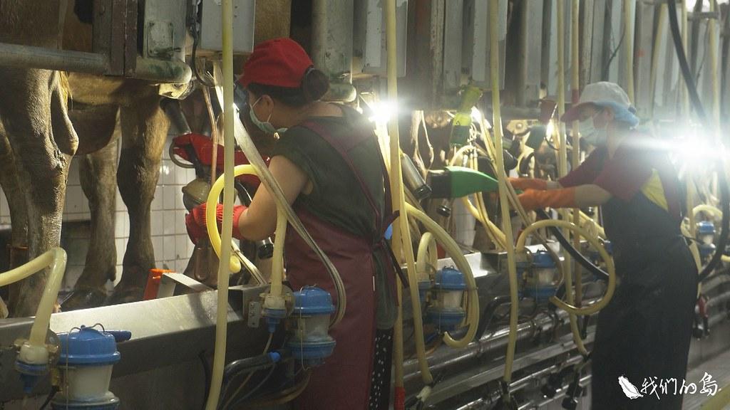 源源不絕白色的乳汁,一點一滴累積出台灣酪農業,每年高達百億的產值。