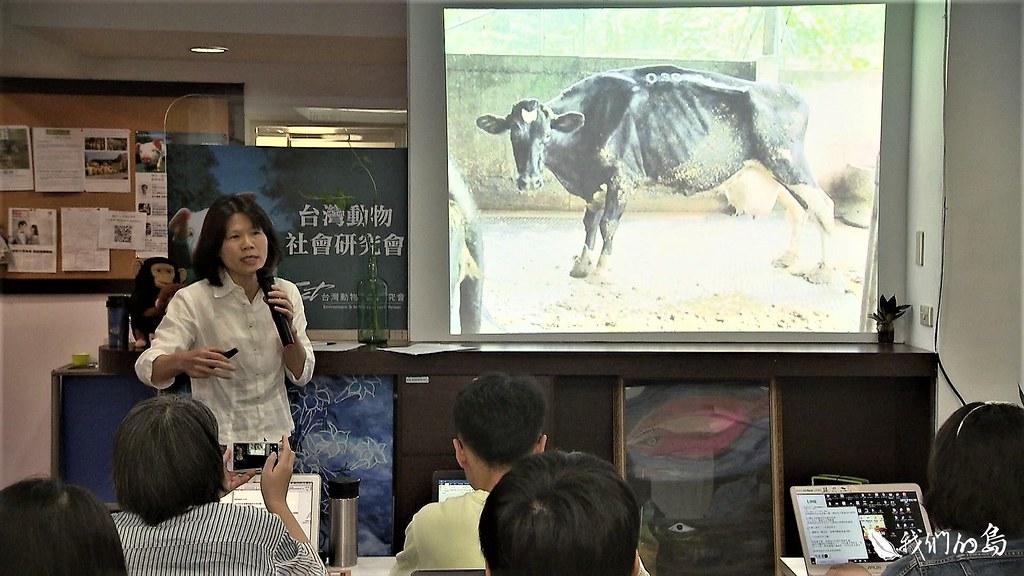 台灣動物社會研究會呼籲農委會應該採取更積極作為,促進乳牛的動物福祉,減輕乳牛的痛苦。