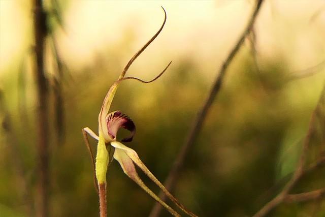 Spider in the Sun, Para Wirra, via Adelaide, South Australia