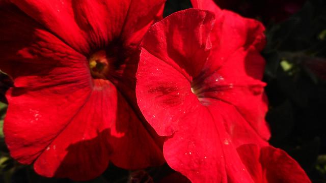Summer Flowers 08