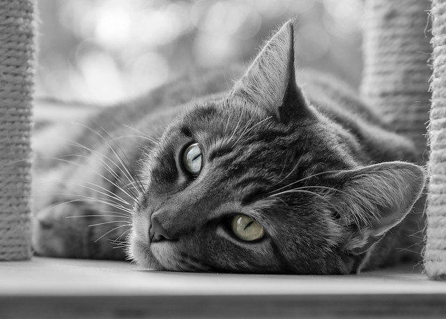 Lazy Bokeh Cat