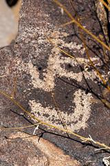 1908 Pichacho Mountain Petroglyphs 09