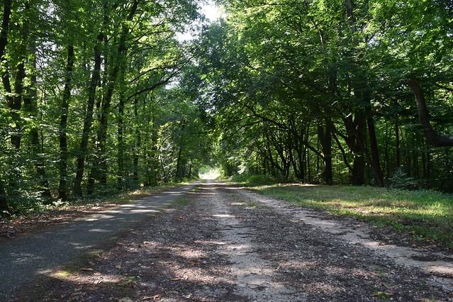 Bos bij Groesbeek