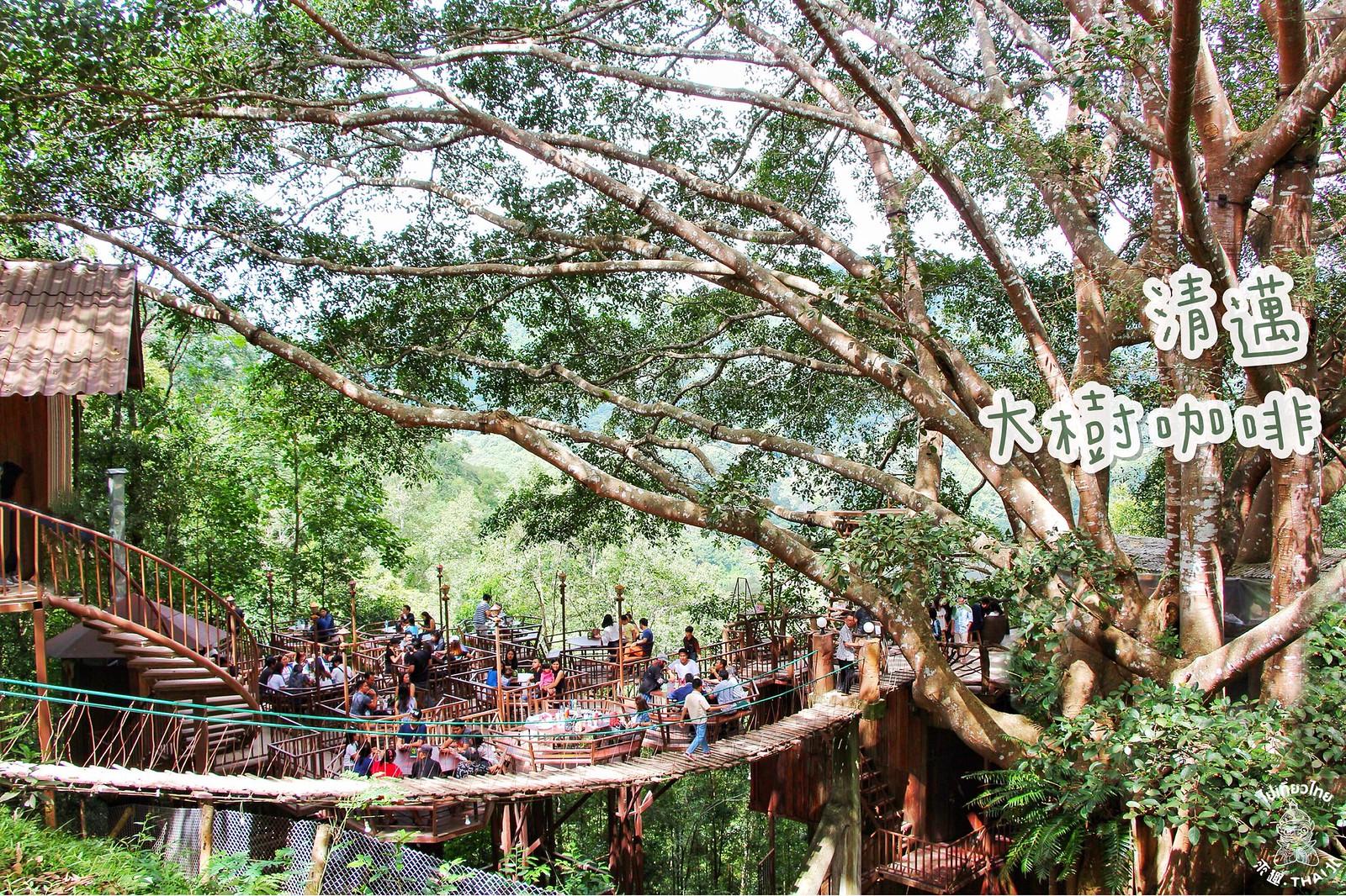 清邁傳奇。《大樹咖啡 The Giant Chiangmai》