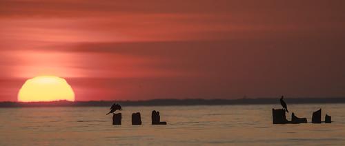 sunrise nature landscape sea baltic gdynia cormornats d500 nikon ngc birds sun red banbiedoły gulfofgadansk poland polska bokeh hel costline yellow