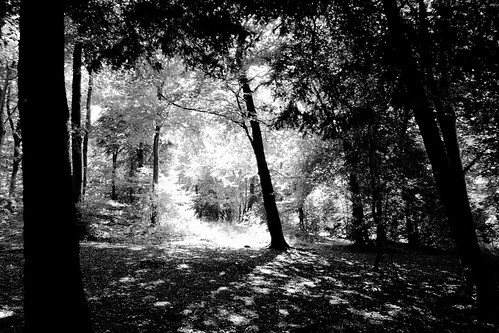 Forest Foray 2