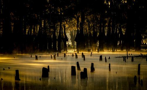 louisiana lakebistineau lake swamp cypresstrees trees water sunrise mist lakebistineaustatepark