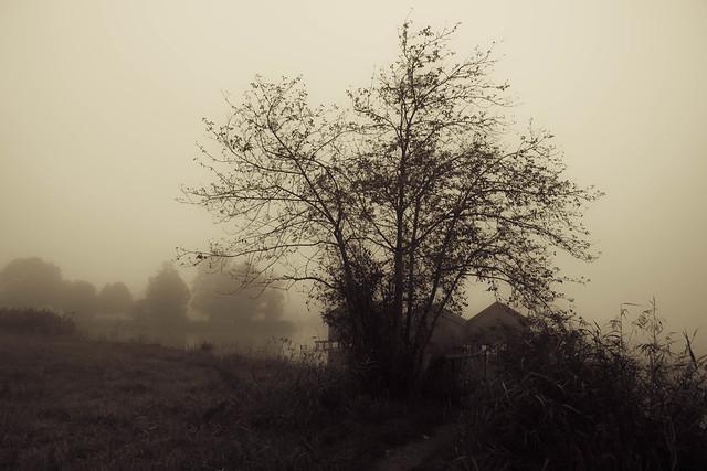 On a foggy day