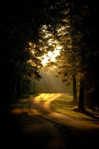 lakebistineaustatepark road sunrise louisiana