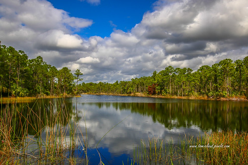 landscape seascape lake water pond clouds cloudy sky weather trees grass reflect reflection nature mothernature outdoors park halpatiokee halpatiokeeregionalpark stuart florida usa