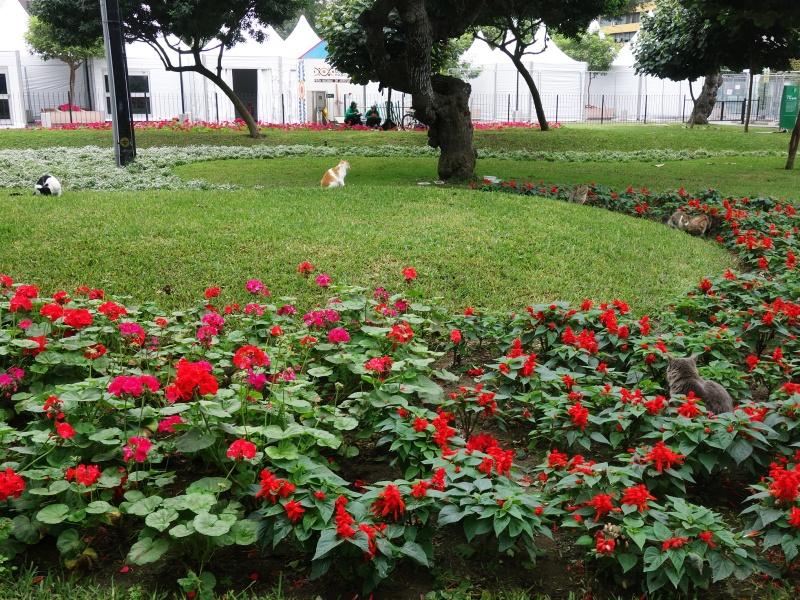 Kennedy Park Miraflores