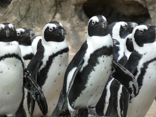 Fort Wayne Children's Zoo 09022019