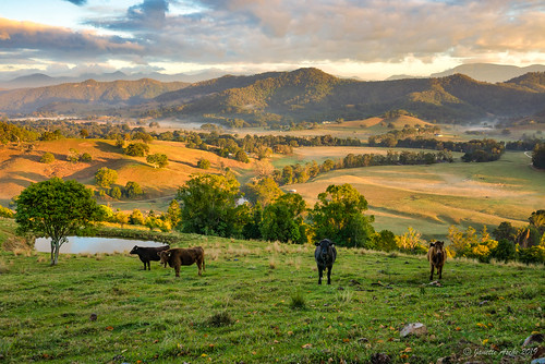 clouds rural sunrise cattle dam farm australia nsw newsouthwales eungella tweedvalley