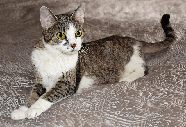 Maci, the cat