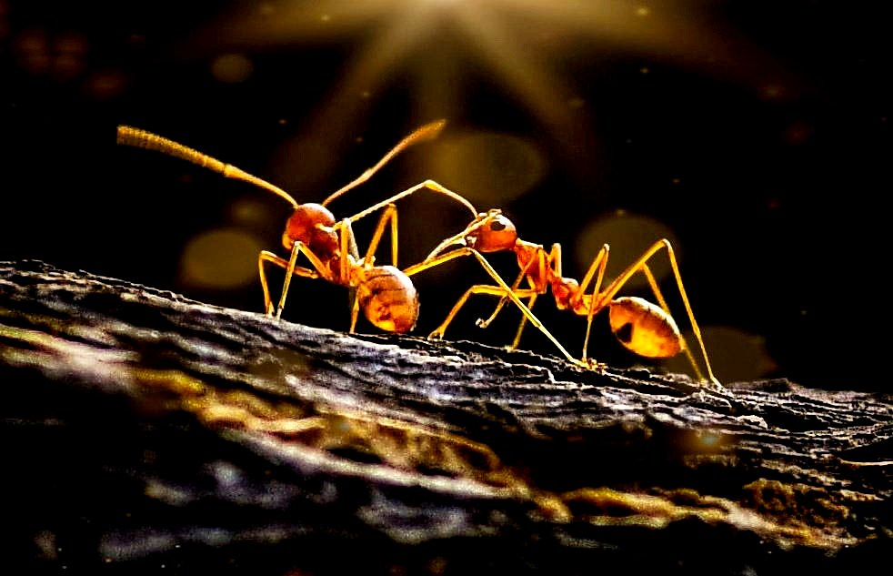 Sunbathing ants