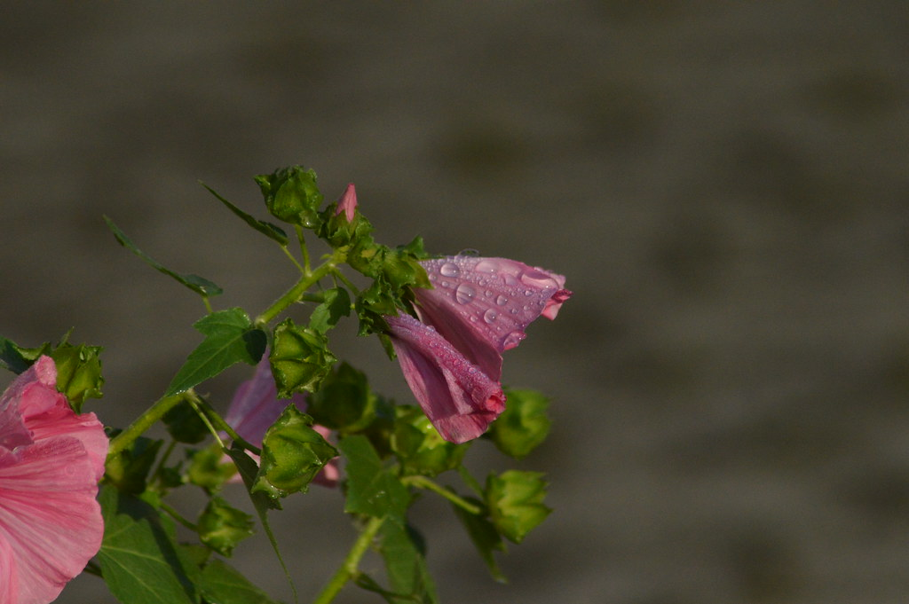 after the Rain 2