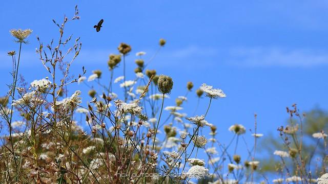 The meadow garden