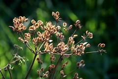 Late summer seeds