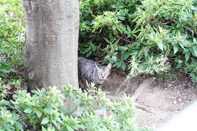 Today's Cat@2019-09-03