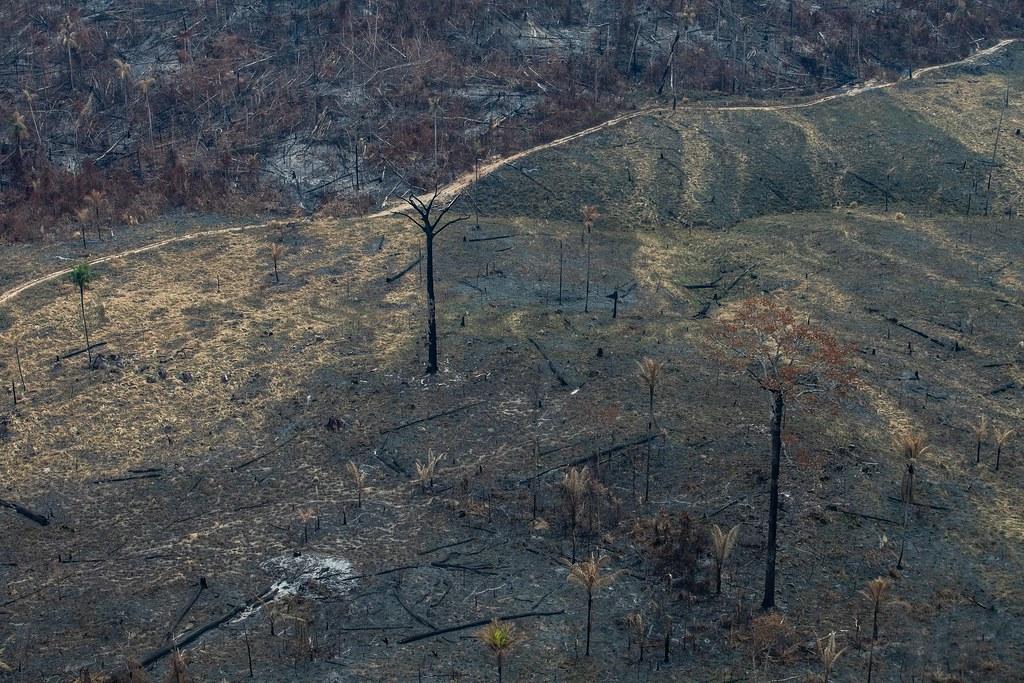 8月23日綠色和平巴西調查團隊空拍帕拉州Novo Progresso市,森林延燒情形。 © Victor Moriyama / Greenpeace