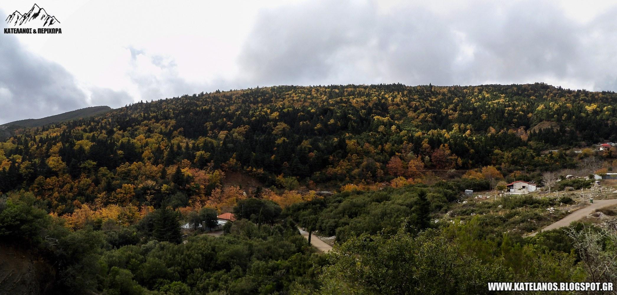οικισμος σκαλτινα αγιου βλασιου αιτωλοακαρνανιας δασος