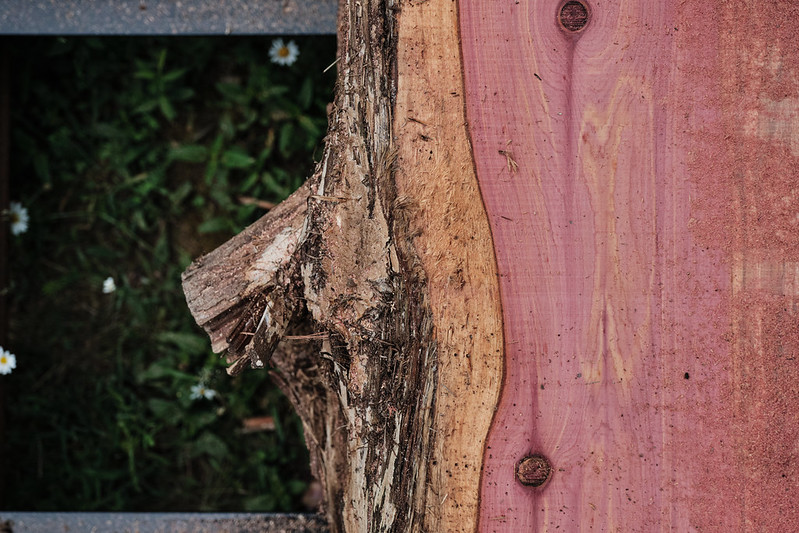 Sawed cedar