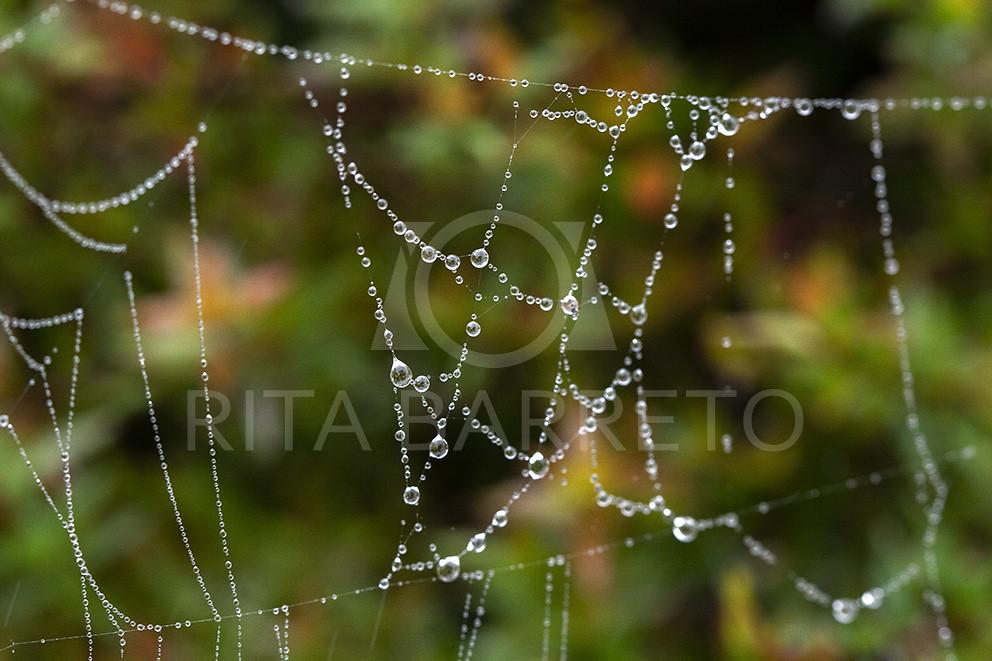 Teia de aranha com gotinhas de chuva