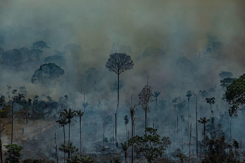 8月23日綠色和平巴西調查團隊空拍巴西帕拉州Novo Progresso市受災情況。 © Victor Moriyama / Greenpeace