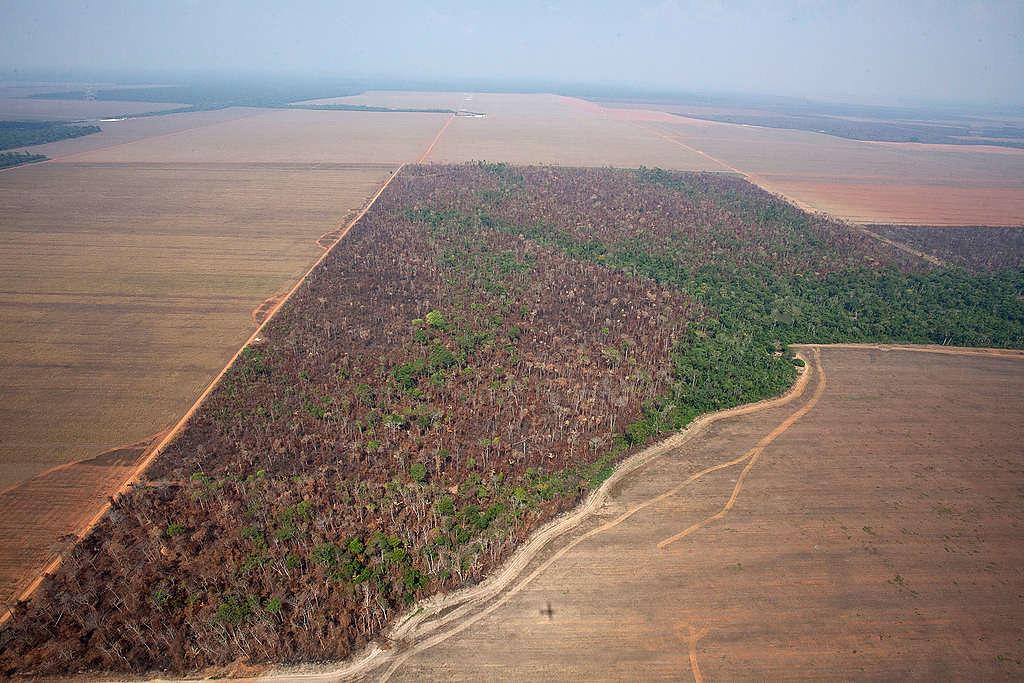 2014年10月16日綠色和平巴西調查團隊空拍馬托格羅索州(Mato Grosso),監測到樹林因種植大豆與畜牧,遭受火焚與砍伐。 © Paulo Pereira / Greenpeace