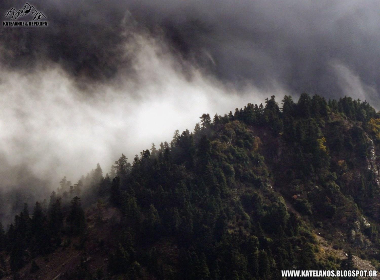 ανταρες στα βουνα ομιχλη ελατα