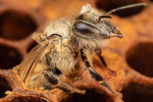 Honeybee Birthday II