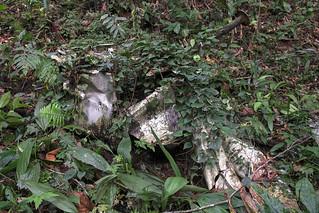 RAF Bristol Belvedere HC1 Crash Site In Borneo