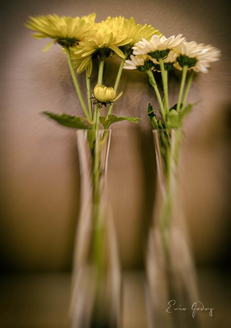 Flowers - duo - bokeh
