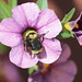 Zoom lens on bee