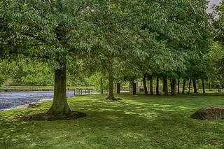 Algonquin park trees