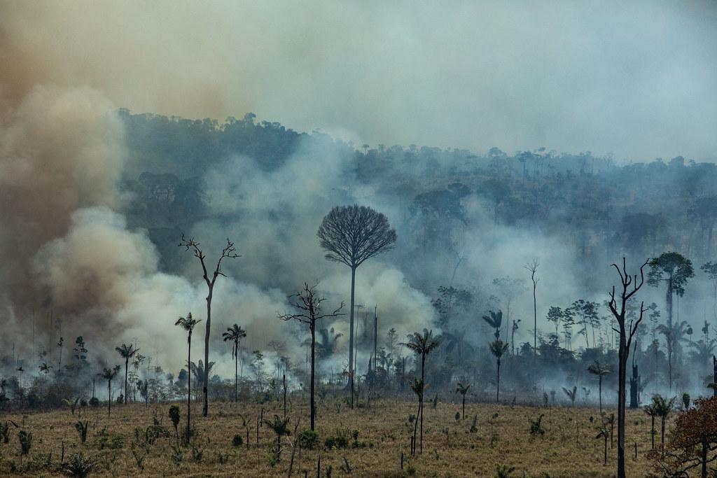 亞馬遜雨林大火空拍照。 Victor Moriyama /綠色和平提供。