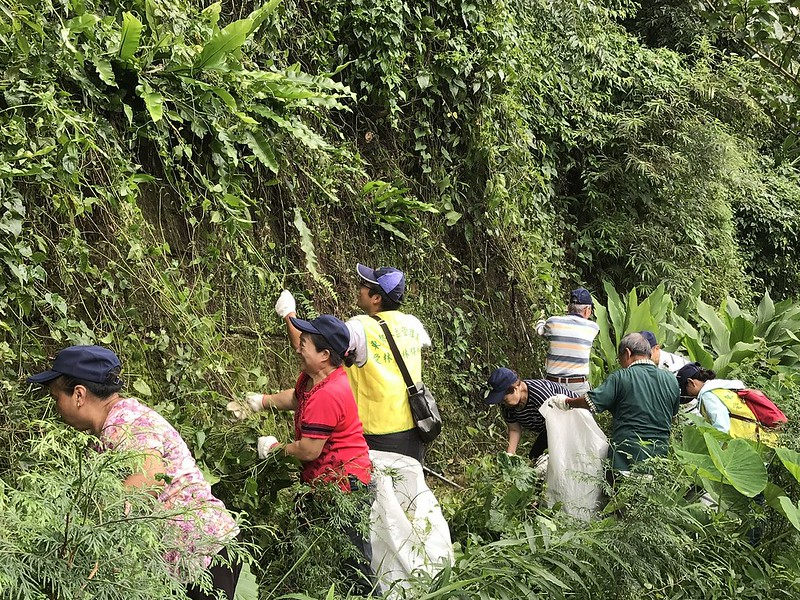 移除小花蔓澤蘭行動。照片來源:林務局東勢林管處。